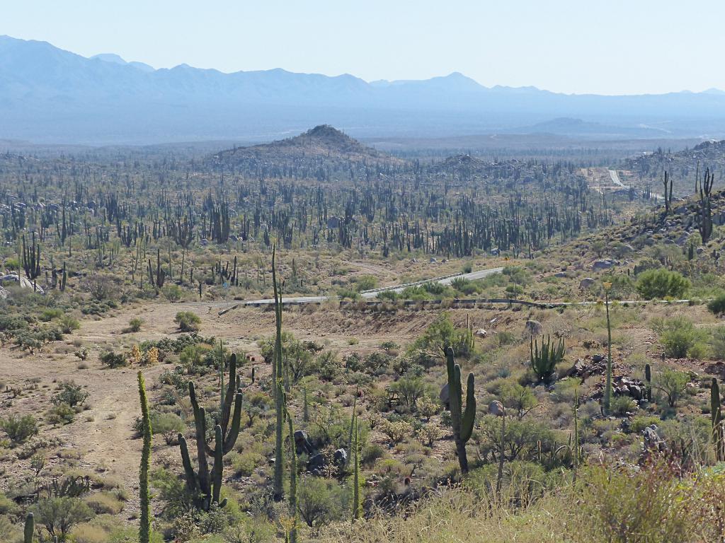 La Basse Californie, cette étroite bande de terre longue d'environ 1700 km  attire l'oeil sur les cartes. Je ne savais pas du tout quoi y trouver.